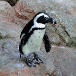 渋谷から近い動物園・植物園・水族館 リスト一覧